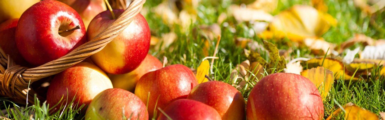Закупаем яблоки на переработку от 1000 кг