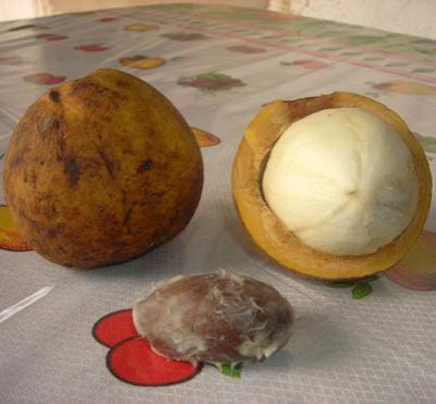 Топ — 20 самых экзотических фруктов мира